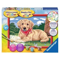 Ravensburger Painting by numbers-cute Labrador