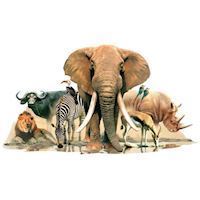 Wall sticker Animals of Africa