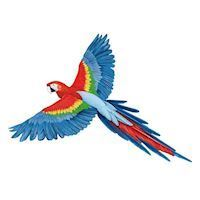 Wall sticker Parrot