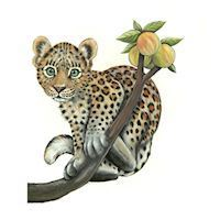Wall sticker Baby Leopard on branch
